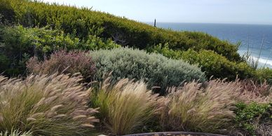 Landscape maintenance in Malibu, CA