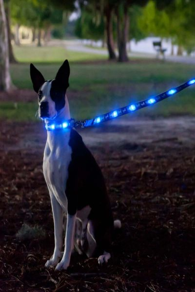 Interpet Dog-e-Glow LED Dog Lead Blue Bone