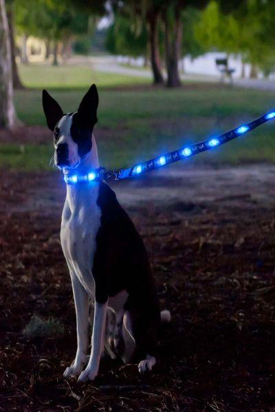 Interpet Dog-e-Glow LED Dog Lead Blue Bone