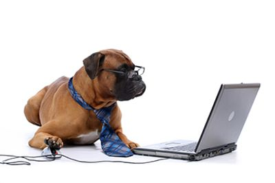 Dog and computer image