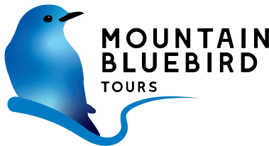 Mountain Bluebird Tours