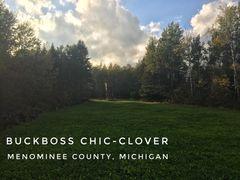 Buckboss Chic-Clover