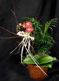 Single Orchid Gift Basket