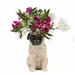 Large Pug Flower Vase in Fawn by Quail Ceramics