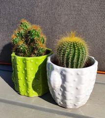 a pair of mini cactus in ceramic pots