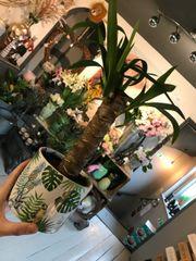 Yukka house plant in a Ceramic Pot