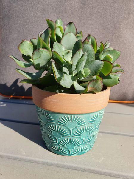 Succulent in turquoise ceramic pot