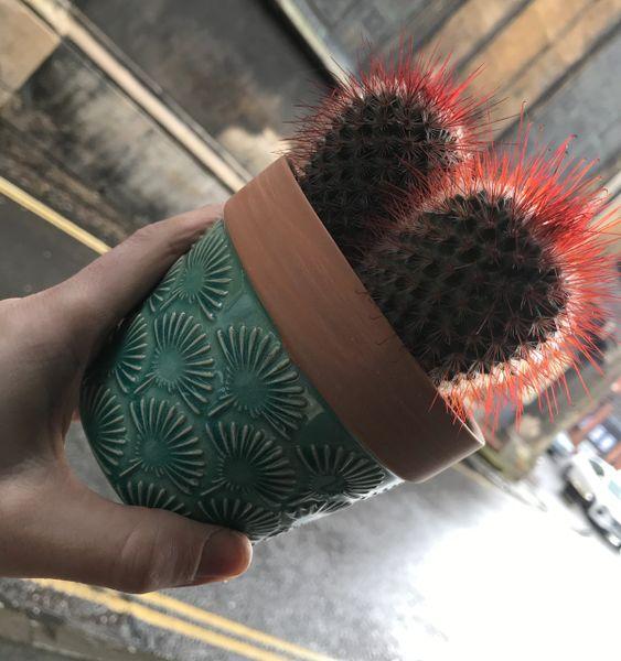 Lovely Cactus in turquoise ceramic pot