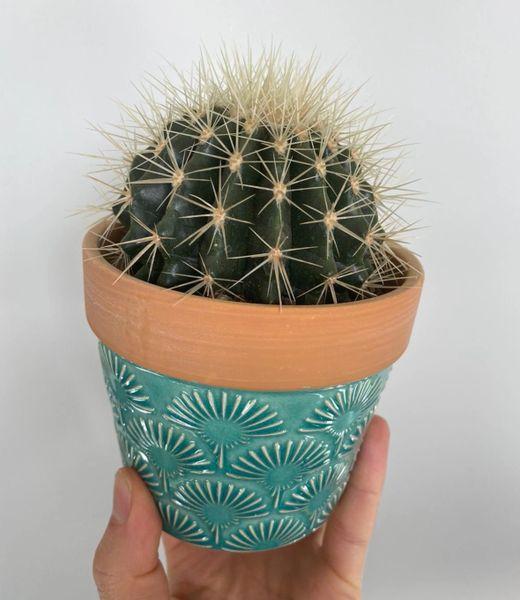 Cactus in turquoise ceramic pot