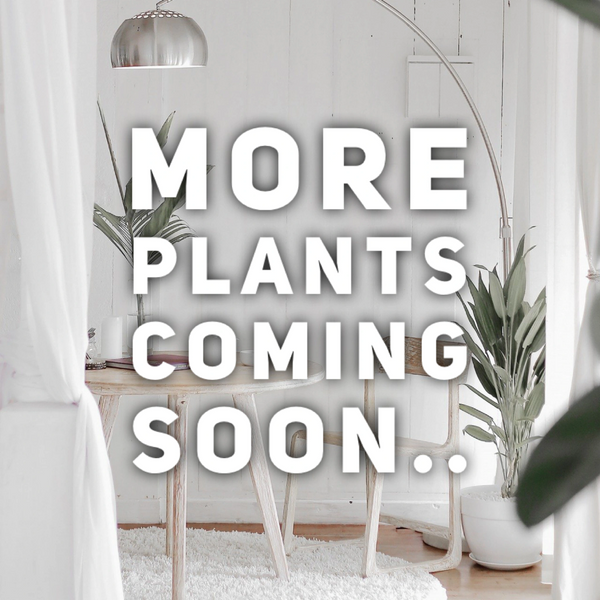 New House Plants Arriving Soon