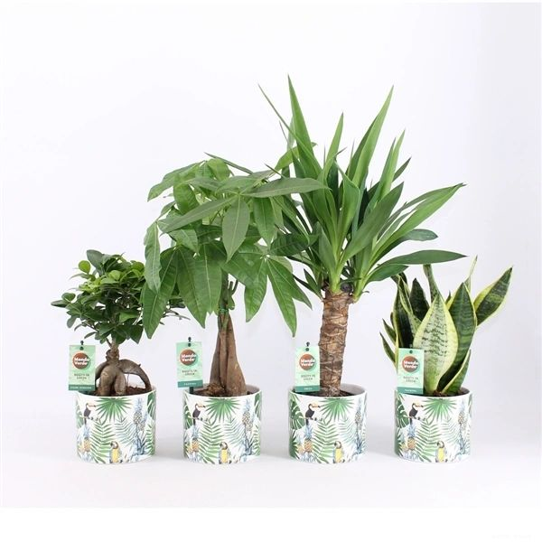 Tropical Potted Plant mix (35cm) - choose