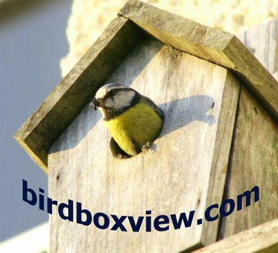 birdboxview