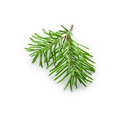 FIR NEELE ESSENTIAL OIL 10 ML