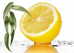 EUCALYPTUS LEMON ESSENTIAL OIL 30 ML