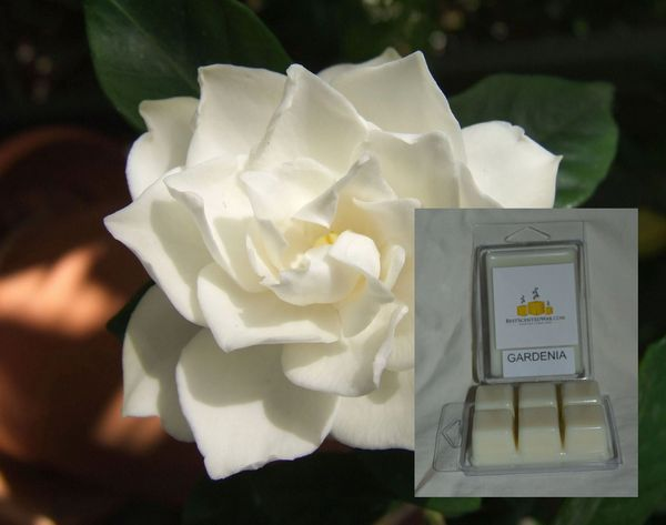 Gardenia Flower Triple Scented Wax Melt (6 Triple Scented Cubes In Each Shell)