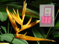 Bird Of Paradise Triple Scented Wax Melt (One Shell holds 6 cubes)