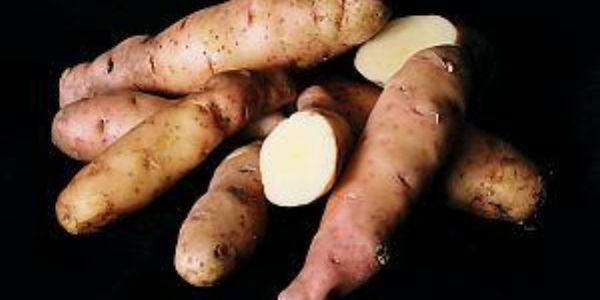 fingerling potatoes, long Anya variety, whole and cut to show inside, on black background