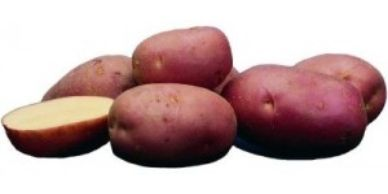 closeup of potatoes, whole and cut to show white interior, roko variety, on white background