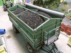 23310 Rapeseed Crop Vehicle/Trailer Load 1:35/1:32 Scale by Juweela