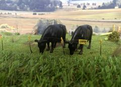 Silage/Mowing Grass Mat by HLT Miniatures FB069