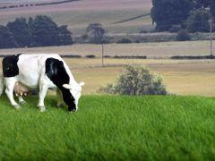 6mm Spring Grass Mat by Noch N00400