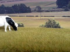 6mm Natural Grass Mat by Noch N00406