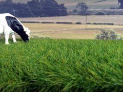 12mm Spring Grass Mat by Noch N00410