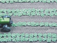 Cabbage Plants 1:32 Scale by Juweela