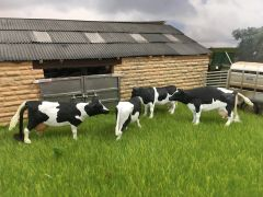 Holstein Cow Set Painted 1:32 Scale by FabScenics