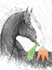 Gift Enclosure Card: Horse giving a gift of Carrots 4 blank-inside cards, 4 envelopes - Item # GEC Carrots