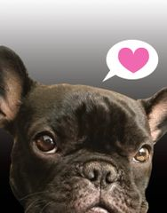Birthday Card: French Bulldog Thinking of You - Item# GC B FBD