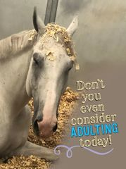 Birthday Card: Grey Horse - Don't you even consider adulting today! - Item# GC B Aiken