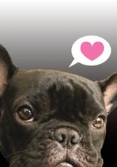 Gift Enclosure Card: French Bulldog with Heart 4 blank-inside cards, 4 envelopes - Item # GEC X FBD