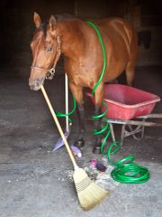 Birthday Card: Horse wrapped in a hose - Item# GC B Clutter