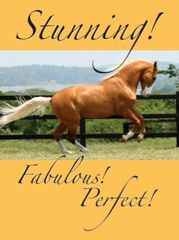 Birthday Card: Stunning, Fabulous, Perfect! - Item # GC Palomino