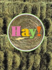 "Thank You Card: ""Hay!"" - Item # GC 01 Hay"