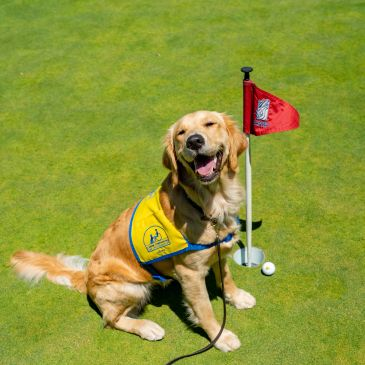 Canine Companion puppy with golf flag