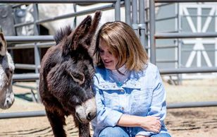 Animal Communication, Ginny Jablonski, Horse Medicine, Medicine Horse, Equine Therapy, NDE