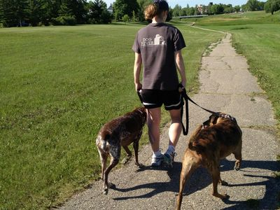 25% off dog walking services, click to learn more