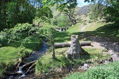 Landscape tree stump