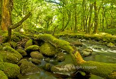 River in lush green