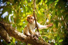 Monkey handout