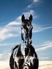 Friesian Horse 1