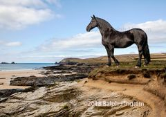 Friesian Horse on the Beach