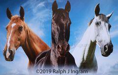 3 Horses in Clouds