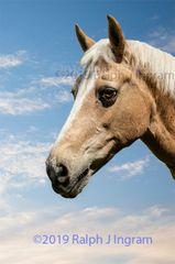 Beige Horse 1