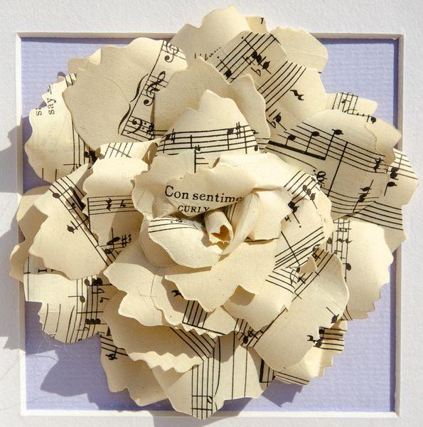 Cream sheet music rose