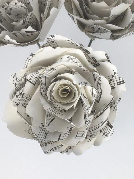 Sheet Music Peony Rose