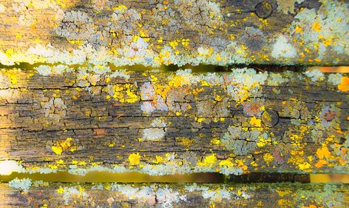 Lichen and Park Bench, St Marys, On