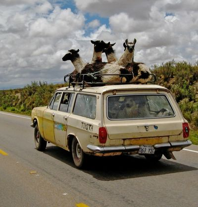 even llamas get taxi service in the altiplano of Bolivia